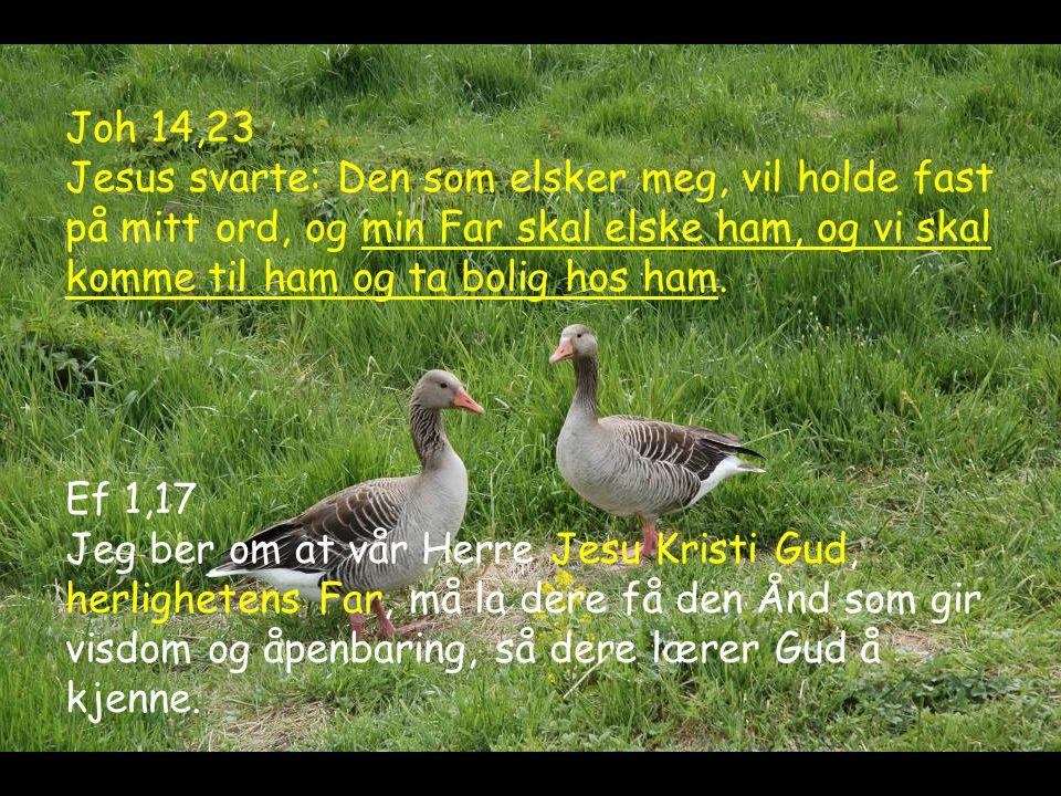 Joh 14,23 Jesus svarte: Den som elsker meg, vil holde fast på mitt ord, og min Far skal elske ham, og vi skal komme til ham og ta bolig hos ham. Ef 1,