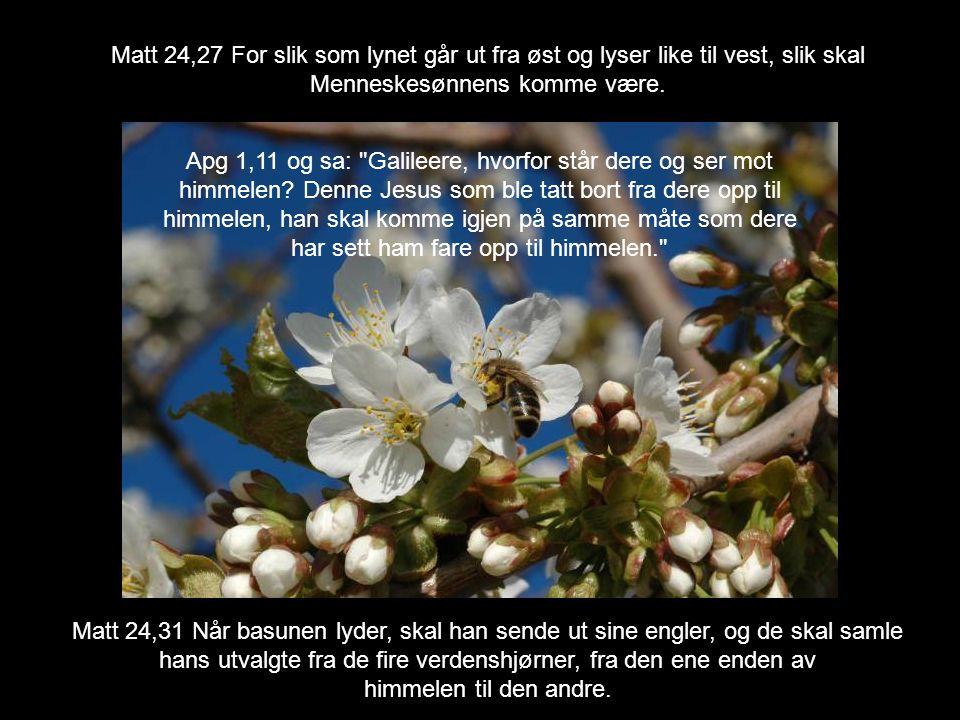Matt 24,27 For slik som lynet går ut fra øst og lyser like til vest, slik skal Menneskesønnens komme være. Matt 24,31 Når basunen lyder, skal han send