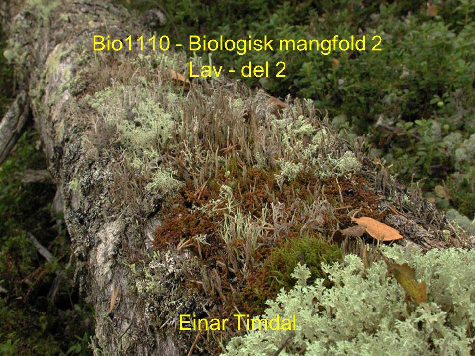 Hotspots for rødlistede lav Fra Norsk LavDatabase (www.nhm.uio.no/lav) pr.