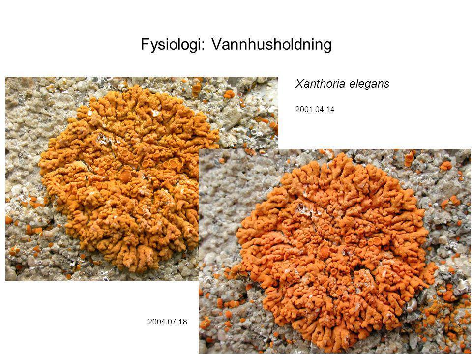 Fysiologi: Vannhusholdning Xanthoria elegans 2001.04.14 2004.07.18