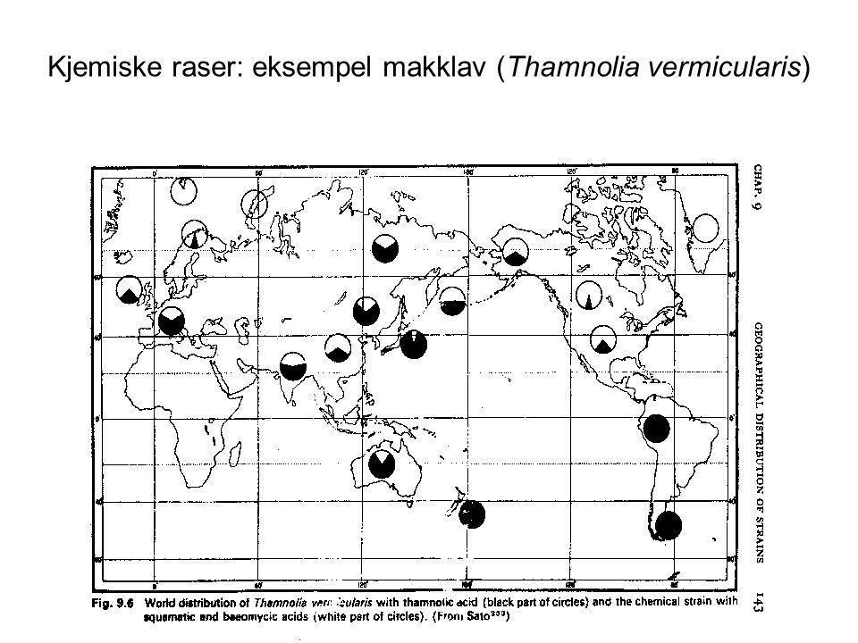 Kjemiske raser: eksempel makklav (Thamnolia vermicularis)