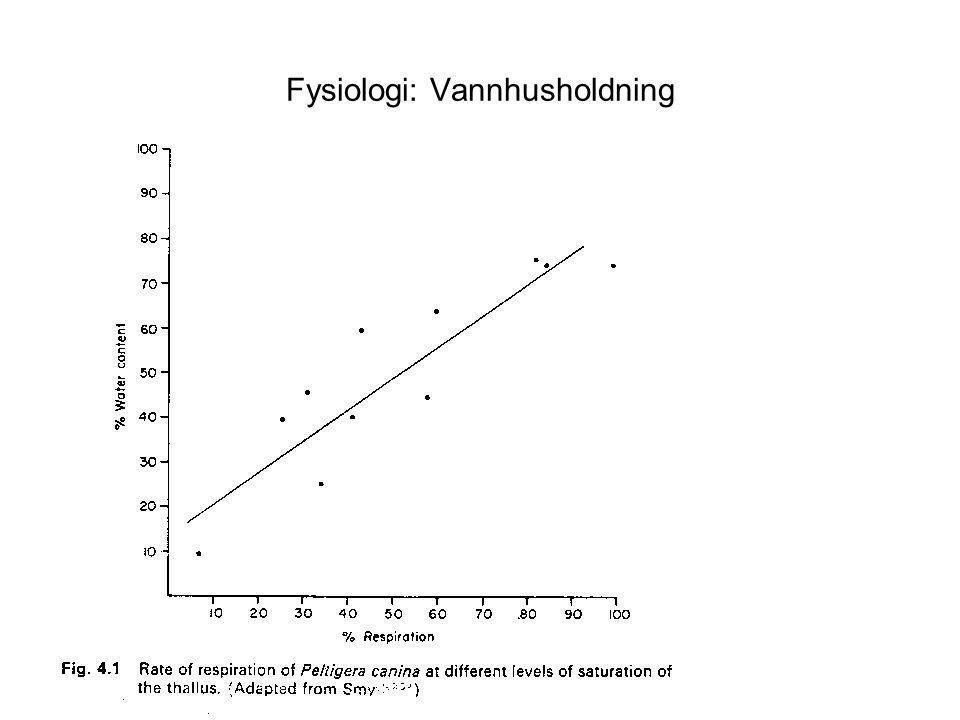 Fysiologi: Lysforhold Stor variasjon i krav til lys Generelt større krav enn hos moser Langt mindre klorofyll pr.