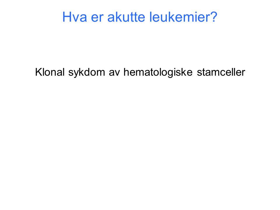 Hva er akutte leukemier? Klonal sykdom av hematologiske stamceller