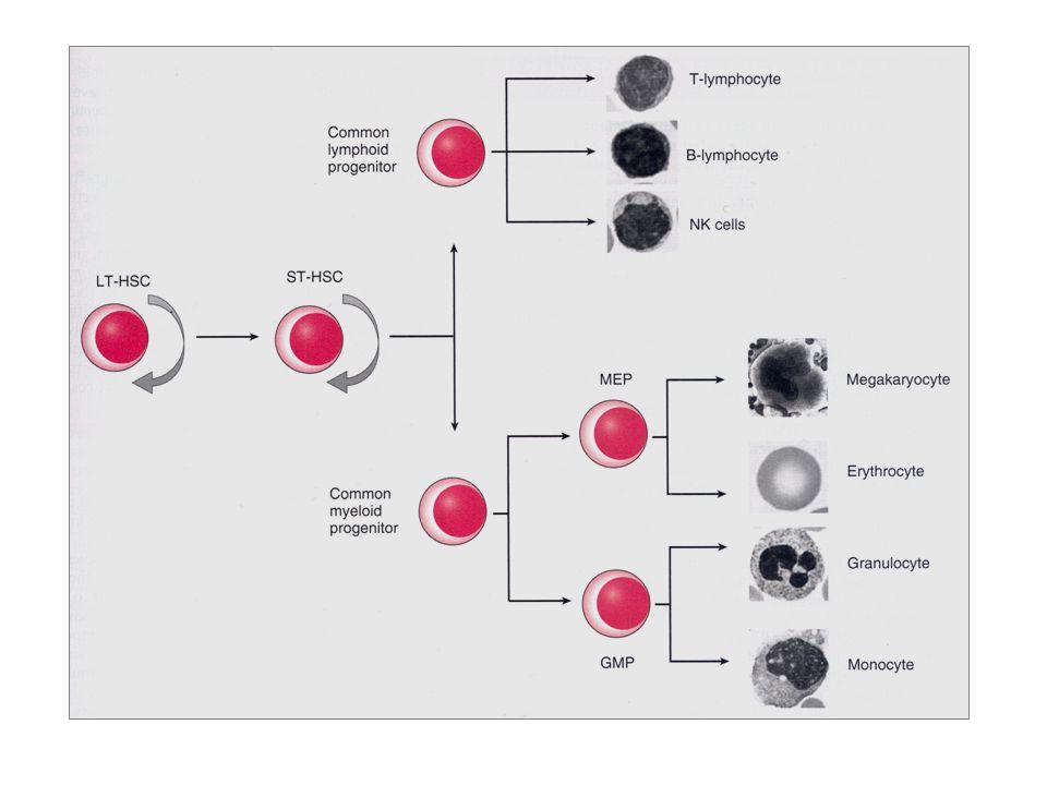 allogen hematopoetisk stamcelletransplantasjon kondisjonering = forbehandling skal drepe 1) immunsystemet til verten slik at transplantatet ikke forkastes og 2) benmarg og 3) leukemien