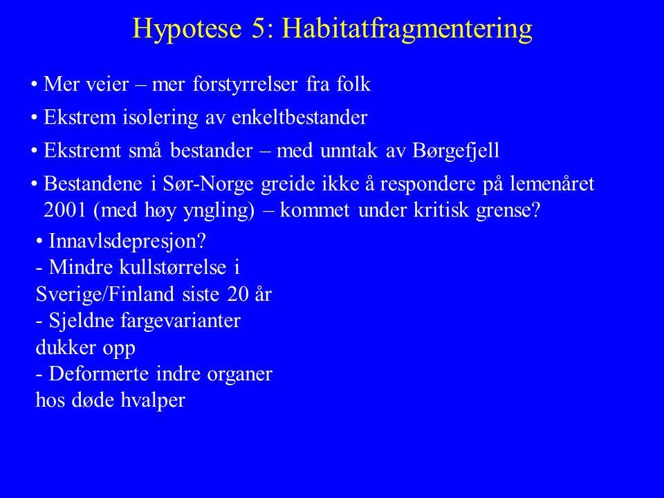 Hypotese 5: Habitatfragmentering Mer veier – mer forstyrrelser fra folk Ekstrem isolering av enkeltbestander Ekstremt små bestander – med unntak av Bø