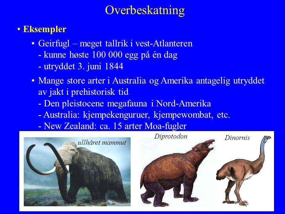 Overbeskatning Eksempler Geirfugl – meget tallrik i vest-Atlanteren - kunne høste 100 000 egg på én dag - utryddet 3. juni 1844 Mange store arter i Au
