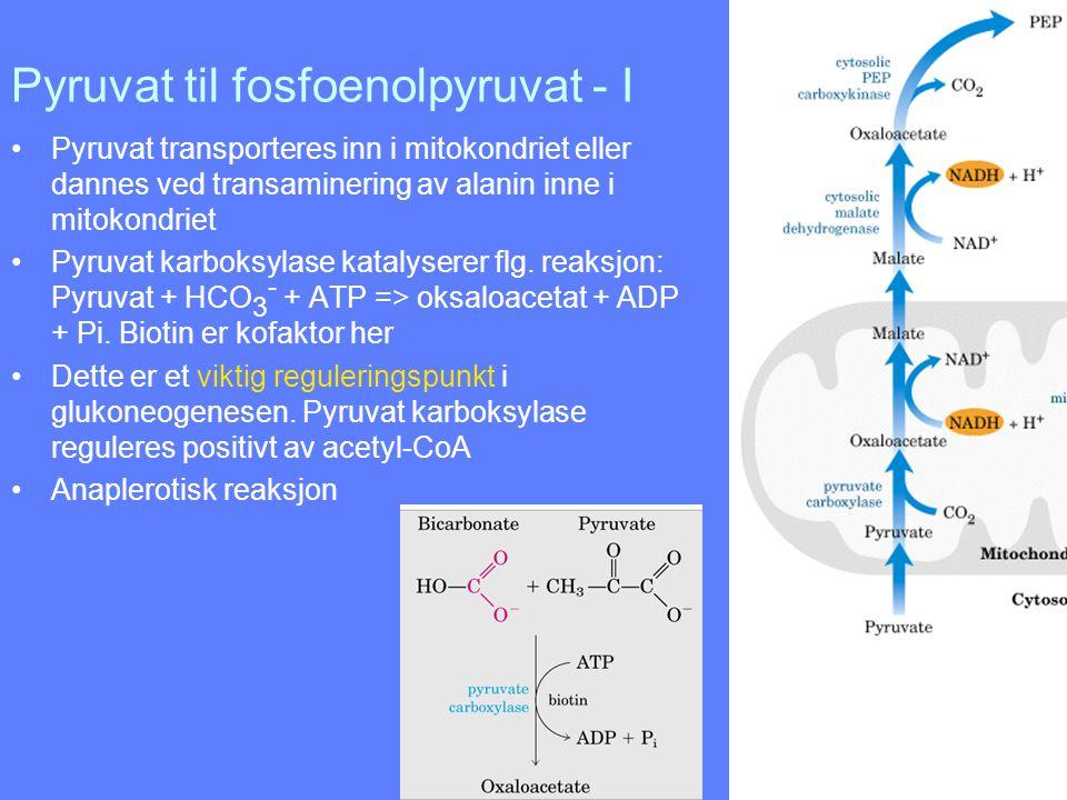 Pyruvat til fosfoenolpyruvat - I Pyruvat transporteres inn i mitokondriet eller dannes ved transaminering av alanin inne i mitokondriet Pyruvat karbok