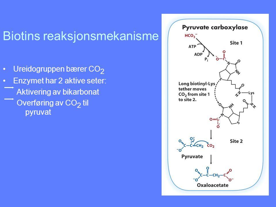 Biotins reaksjonsmekanisme Ureidogruppen bærer CO 2 Enzymet har 2 aktive seter: Aktivering av bikarbonat Overføring av CO 2 til pyruvat