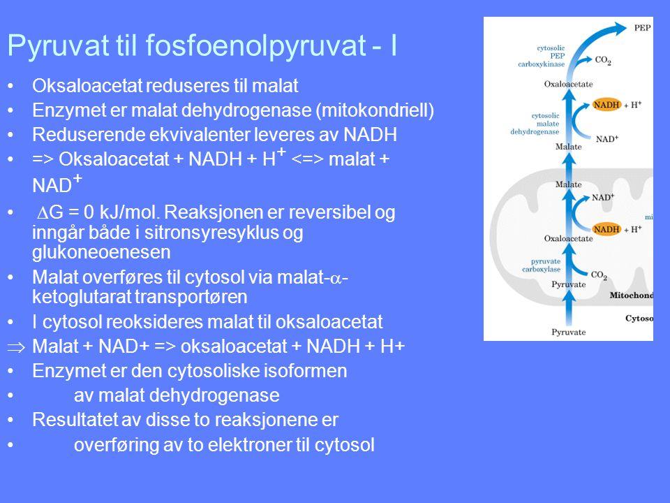 Pyruvat til fosfoenolpyruvat - I Oksaloacetat reduseres til malat Enzymet er malat dehydrogenase (mitokondriell) Reduserende ekvivalenter leveres av N