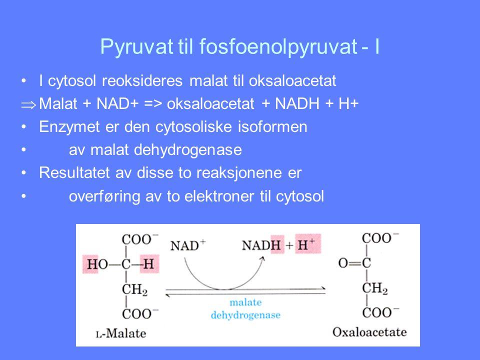 Pyruvat til fosfoenolpyruvat - I I cytosol reoksideres malat til oksaloacetat  Malat + NAD+ => oksaloacetat + NADH + H+ Enzymet er den cytosoliske is