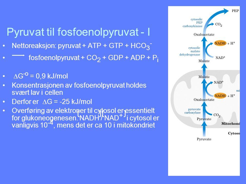 Pyruvat til fosfoenolpyruvat - I Nettoreaksjon: pyruvat + ATP + GTP + HCO 3 - fosfoenolpyruvat + CO 2 + GDP + ADP + P i  G' o = 0,9 kJ/mol Konsentras