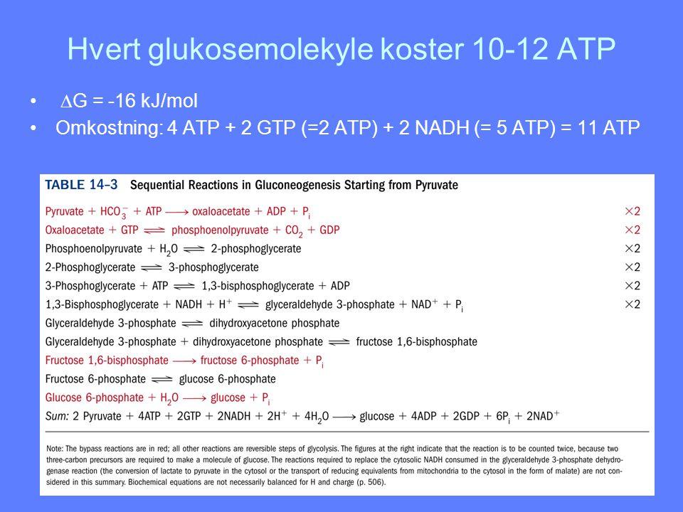 Hvert glukosemolekyle koster 10-12 ATP  G = -16 kJ/mol Omkostning: 4 ATP + 2 GTP (=2 ATP) + 2 NADH (= 5 ATP) = 11 ATP