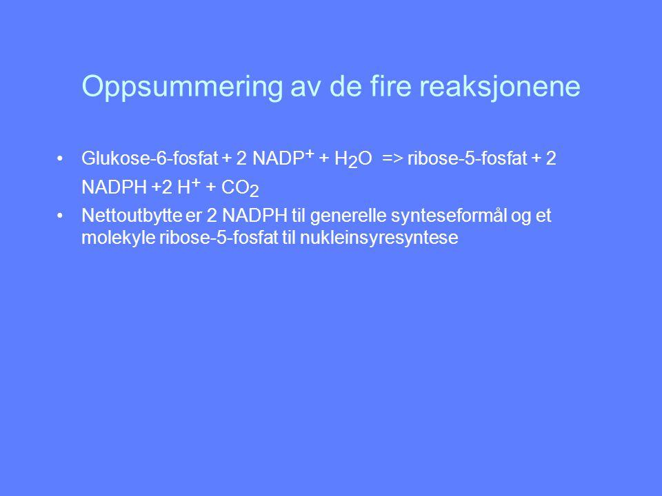 Oppsummering av de fire reaksjonene Glukose-6-fosfat + 2 NADP + + H 2 O => ribose-5-fosfat + 2 NADPH +2 H + + CO 2 Nettoutbytte er 2 NADPH til generel