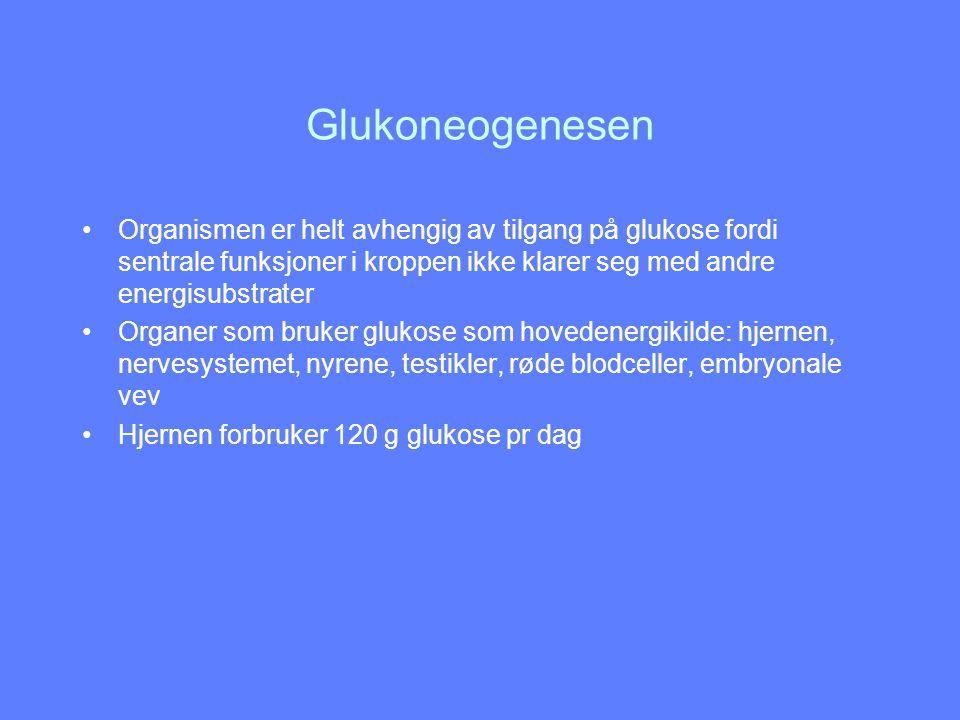 Glukoneogenesens 3.