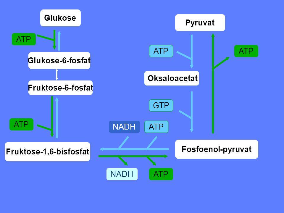 Glukose ATP Glukose-6-fosfat Fruktose-6-fosfat Fruktose-1,6-bisfosfat Fosfoenol-pyruvat ATP GTP NADH Oksaloacetat Pyruvat
