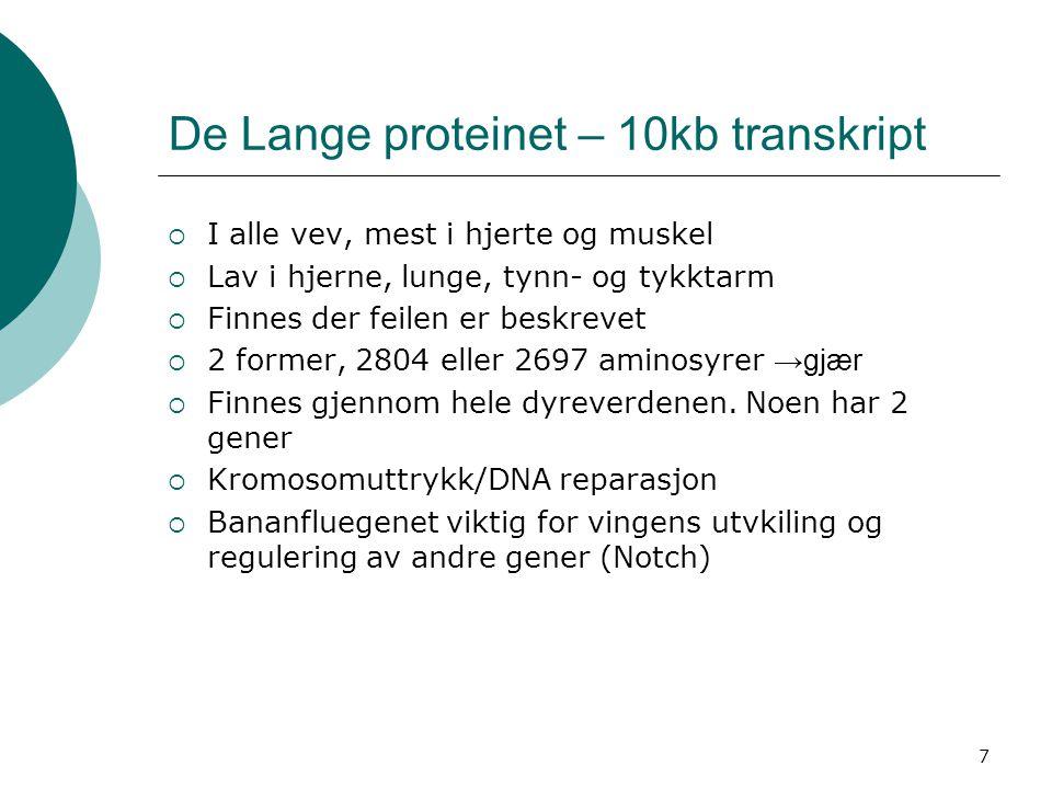 7 De Lange proteinet – 10kb transkript  I alle vev, mest i hjerte og muskel  Lav i hjerne, lunge, tynn- og tykktarm  Finnes der feilen er beskrevet