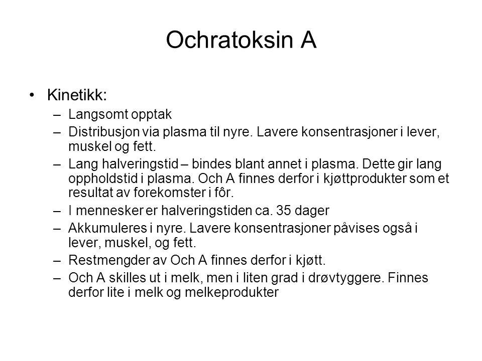 Ochratoksin A Kinetikk: –Langsomt opptak –Distribusjon via plasma til nyre. Lavere konsentrasjoner i lever, muskel og fett. –Lang halveringstid – bind