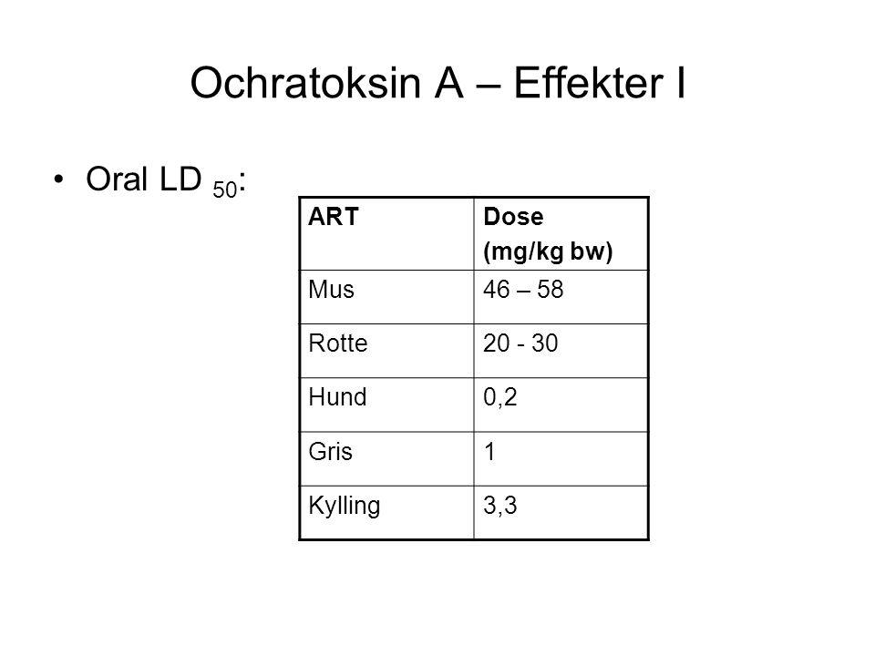 Ochratoksin A – Effekter I Oral LD 50 : ARTDose (mg/kg bw) Mus46 – 58 Rotte20 - 30 Hund0,2 Gris1 Kylling3,3