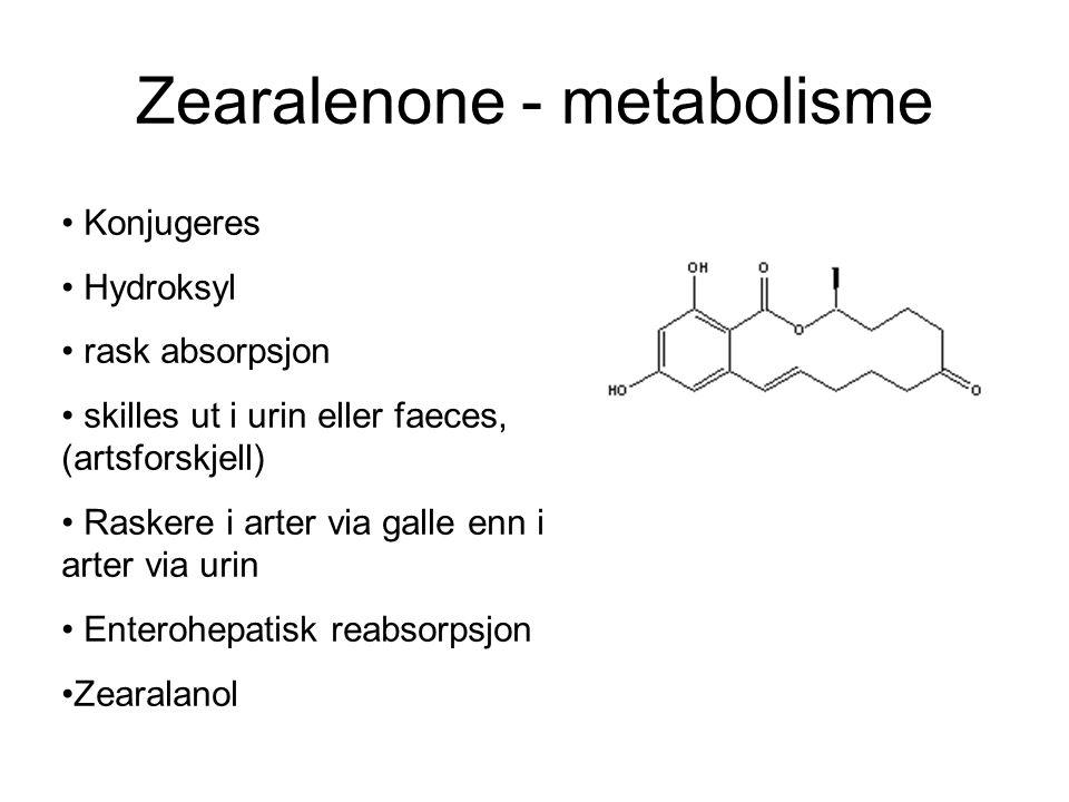 Zearalenone - metabolisme. Konjugeres Hydroksyl rask absorpsjon skilles ut i urin eller faeces, (artsforskjell) Raskere i arter via galle enn i arter