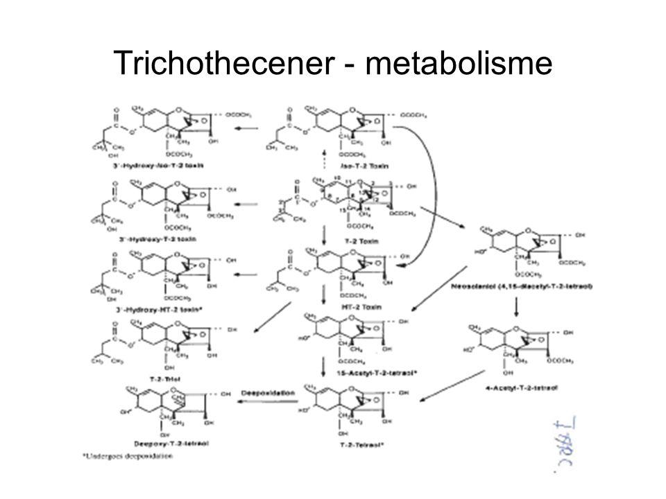 Trichothecener - metabolisme