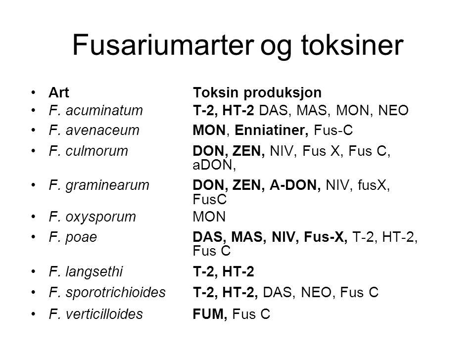 Fusariumarter og toksiner ArtToksin produksjon F. acuminatumT-2, HT-2 DAS, MAS, MON, NEO F. avenaceumMON, Enniatiner, Fus-C F. culmorumDON, ZEN, NIV,
