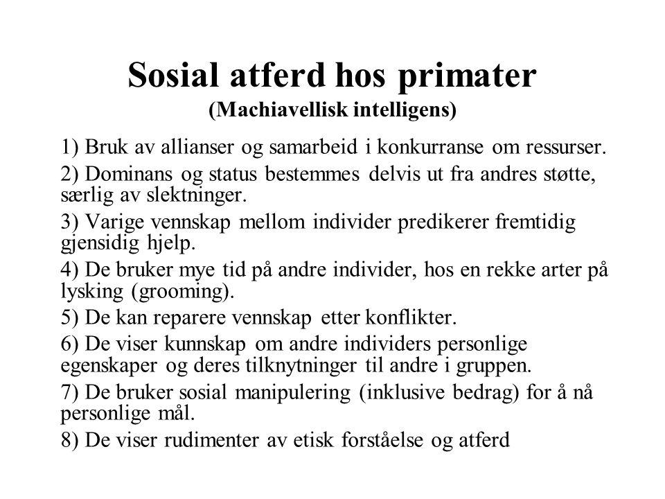 Sosial atferd hos primater (Machiavellisk intelligens) 1) Bruk av allianser og samarbeid i konkurranse om ressurser. 2) Dominans og status bestemmes d
