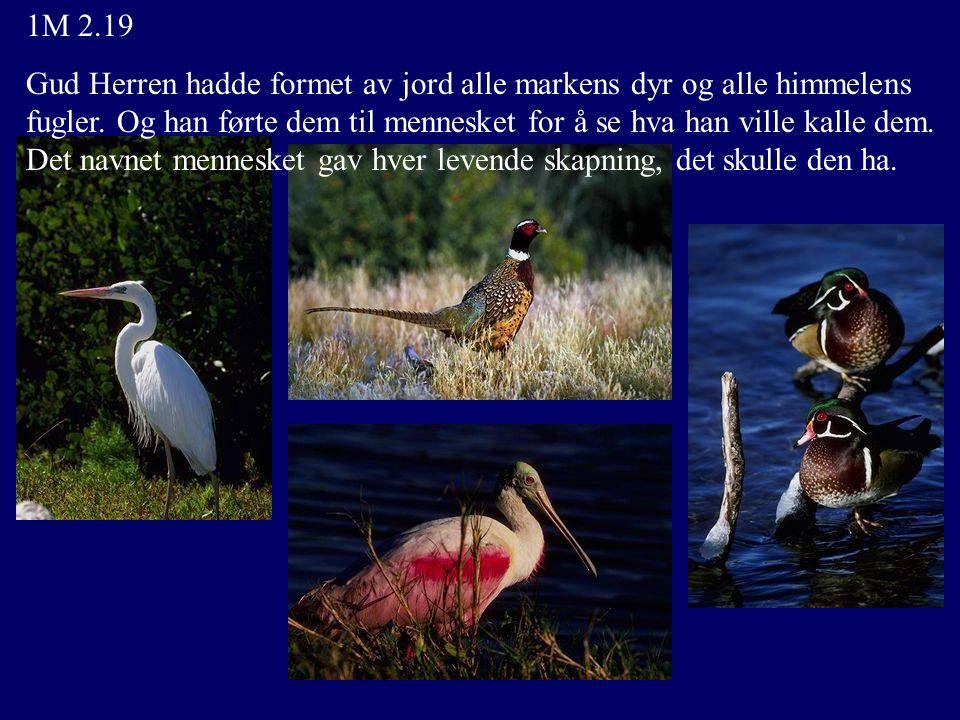 1M 2.19 Gud Herren hadde formet av jord alle markens dyr og alle himmelens fugler. Og han førte dem til mennesket for å se hva han ville kalle dem. De