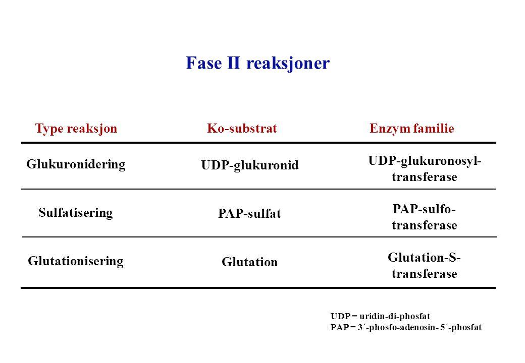 Fase II reaksjoner Type reaksjon Ko-substrat Enzym familie Glukuronidering Sulfatisering Glutationisering UDP-glukuronosyl- transferase PAP-sulfo- tra