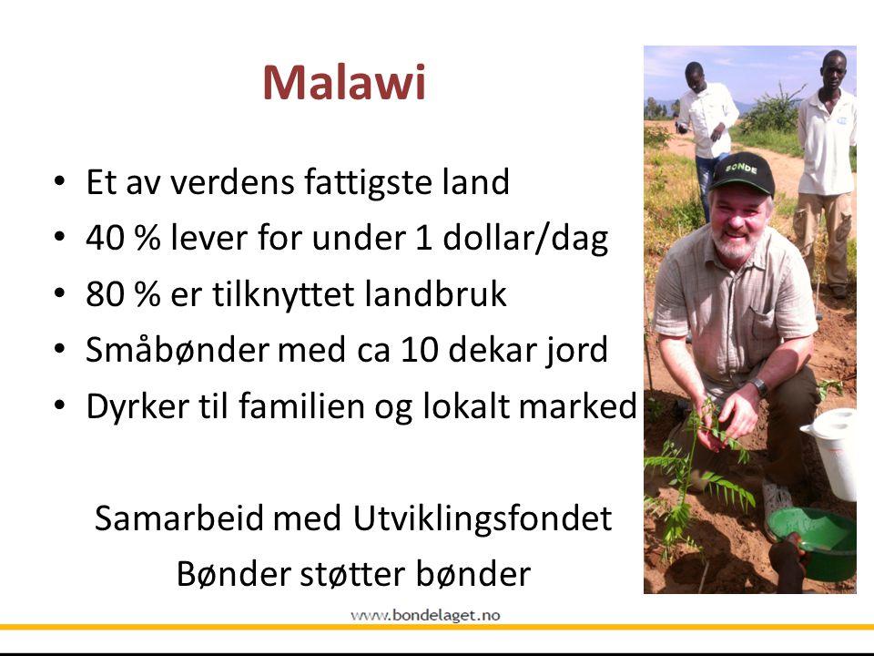 Malawi Et av verdens fattigste land 40 % lever for under 1 dollar/dag 80 % er tilknyttet landbruk Småbønder med ca 10 dekar jord Dyrker til familien og lokalt marked Samarbeid med Utviklingsfondet Bønder støtter bønder