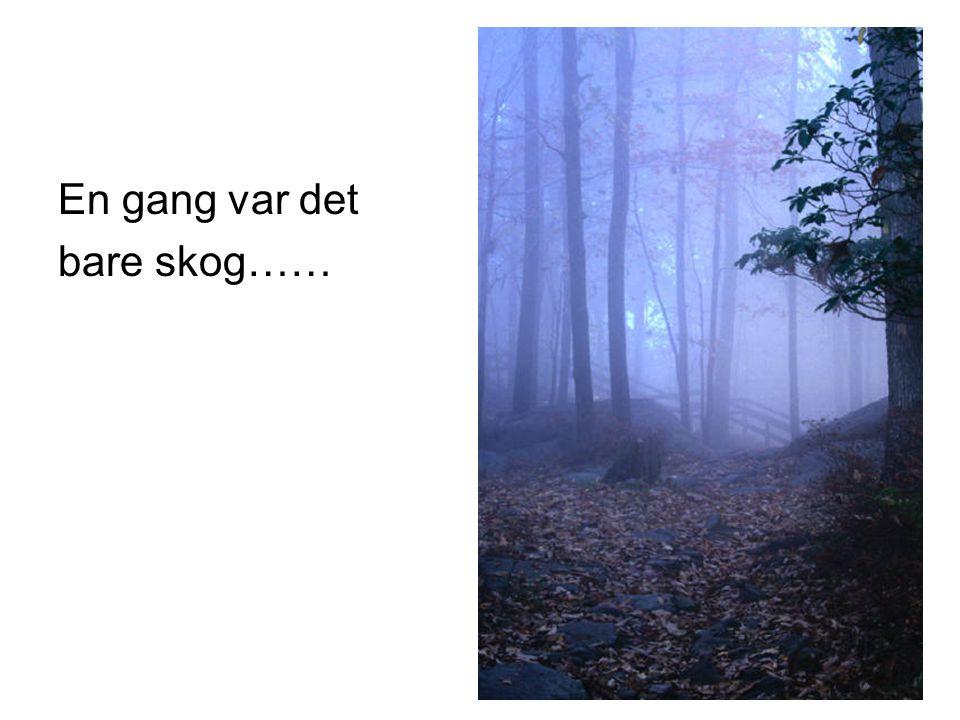 En gang var det bare skog……