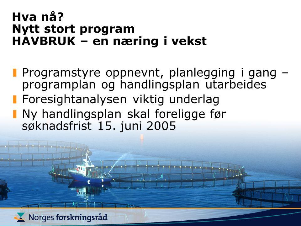 Hva nå? Nytt stort program HAVBRUK – en næring i vekst Programstyre oppnevnt, planlegging i gang – programplan og handlingsplan utarbeides Foresightan