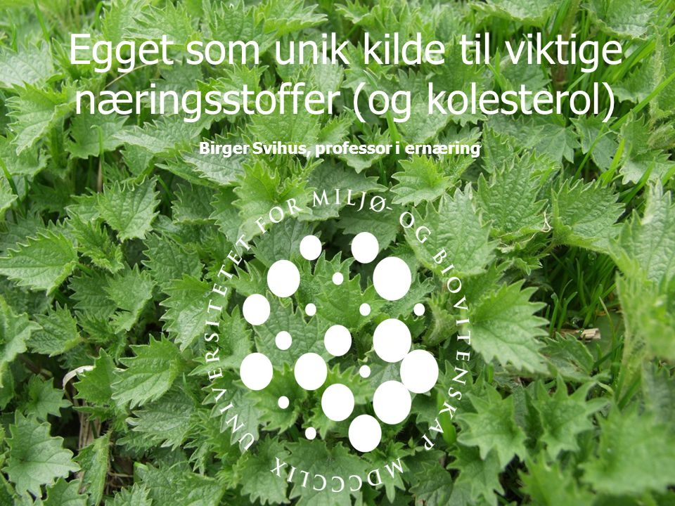 Egget som unik kilde til viktige næringsstoffer (og kolesterol) Birger Svihus, professor i ernæring