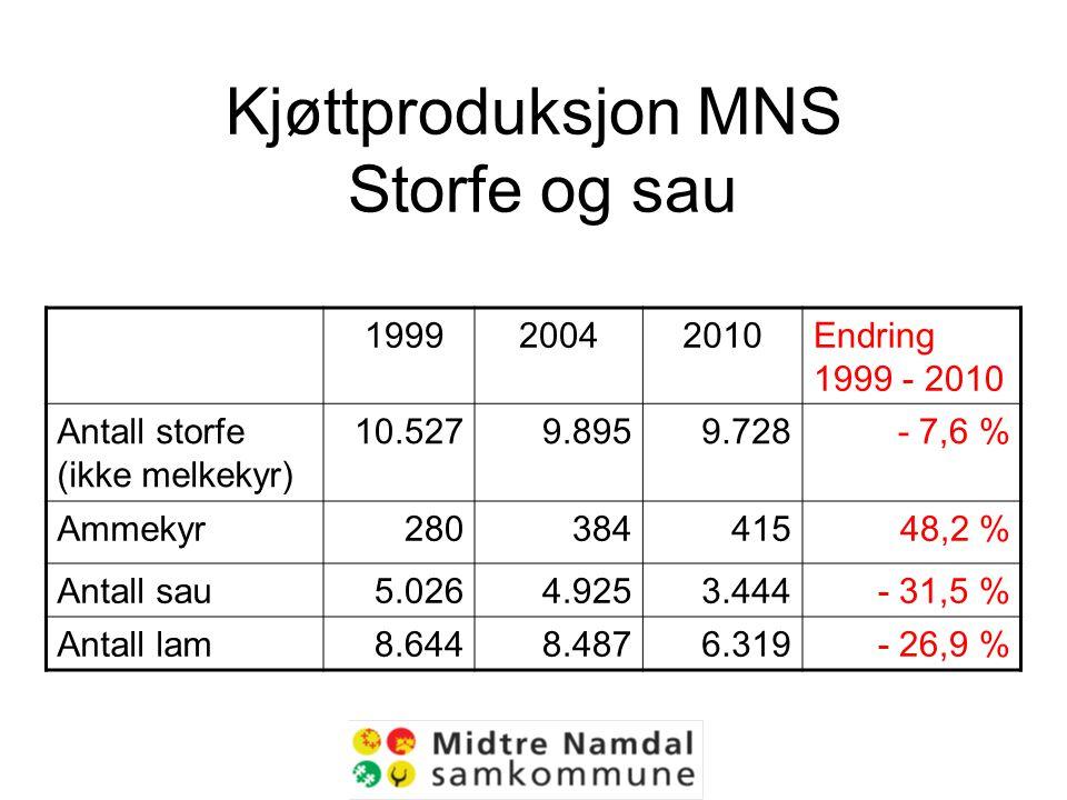 Kjøttproduksjon MNS Storfe og sau 199920042010Endring 1999 - 2010 Antall storfe (ikke melkekyr) 10.5279.8959.728- 7,6 % Ammekyr28038441548,2 % Antall sau5.0264.9253.444- 31,5 % Antall lam8.6448.4876.319- 26,9 %