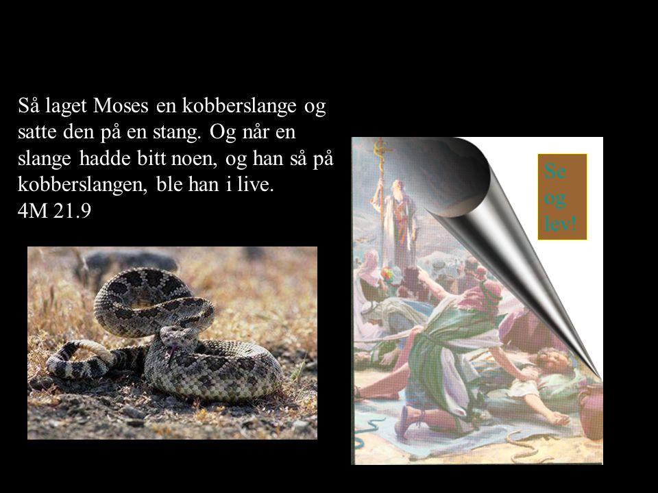 Så laget Moses en kobberslange og satte den på en stang. Og når en slange hadde bitt noen, og han så på kobberslangen, ble han i live. 4M 21.9 Se og l