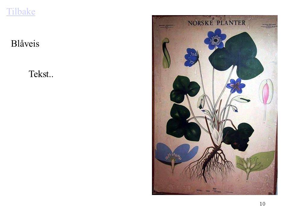 9 Tabeller som utgangspunkt har mange muligheter. Klikk på blomstene. Tenk deg at her kan det være bilder av så mangt Som leder til undersider ved kli
