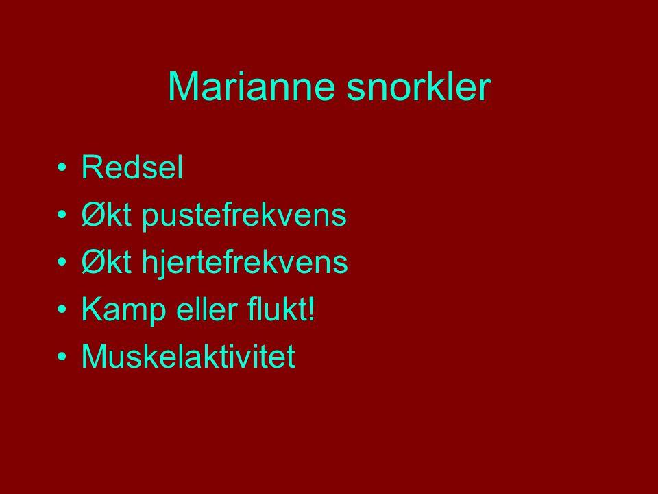 Marianne snorkler Redsel Økt pustefrekvens Økt hjertefrekvens Kamp eller flukt! Muskelaktivitet