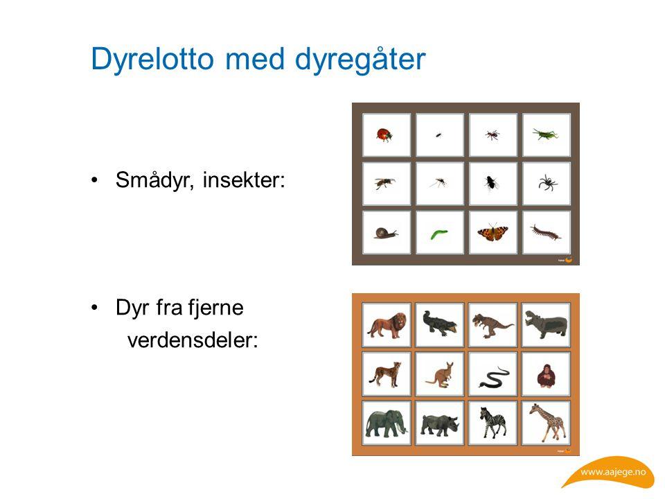 Dyrelotto med dyregåter Smådyr, insekter: Dyr fra fjerne verdensdeler: