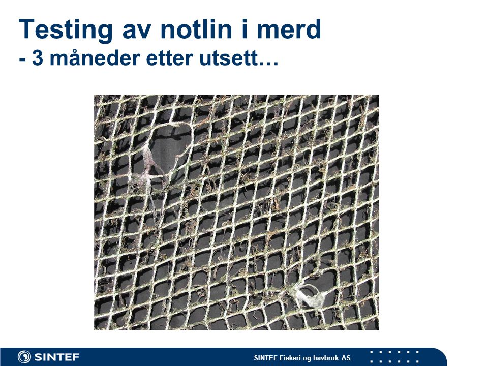 SINTEF Fiskeri og havbruk AS Testing av notlin i merd - 3 måneder etter utsett…