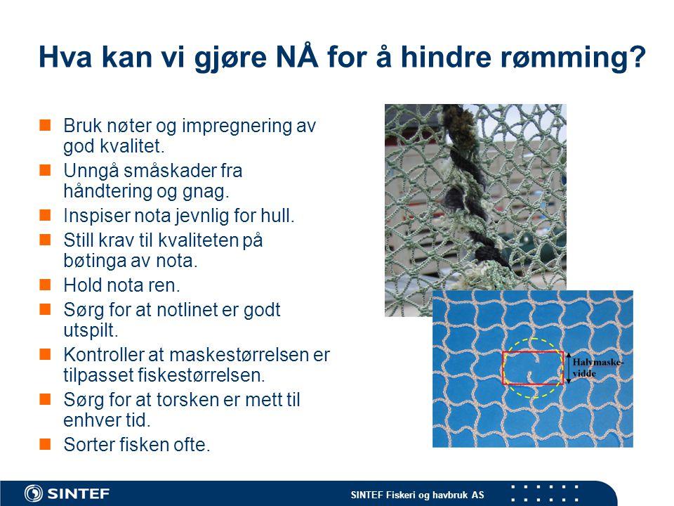 SINTEF Fiskeri og havbruk AS Hva kan vi gjøre NÅ for å hindre rømming.