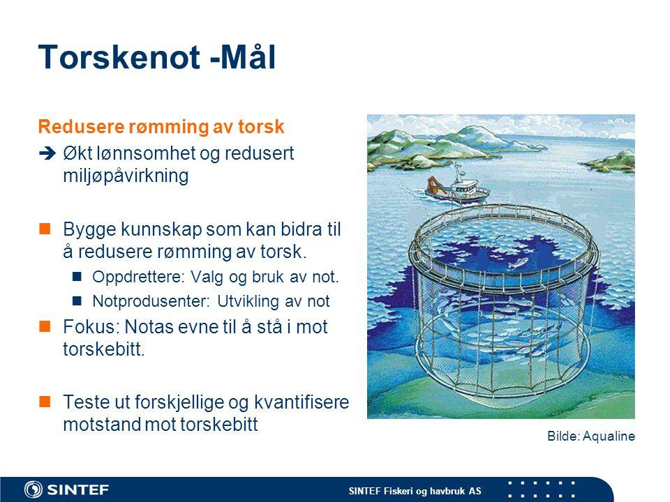 SINTEF Fiskeri og havbruk AS Torskenot -Mål Redusere rømming av torsk  Økt lønnsomhet og redusert miljøpåvirkning Bygge kunnskap som kan bidra til å
