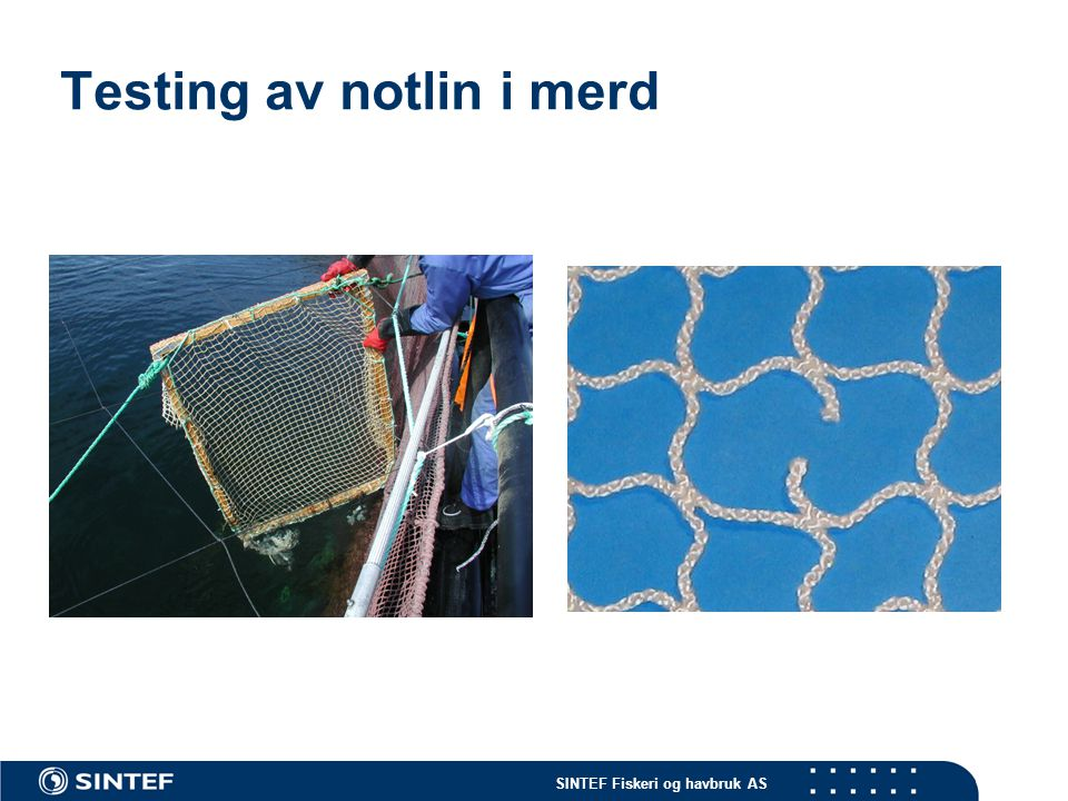 SINTEF Fiskeri og havbruk AS Testing av notlin i merd - 1 måned etter utsett…