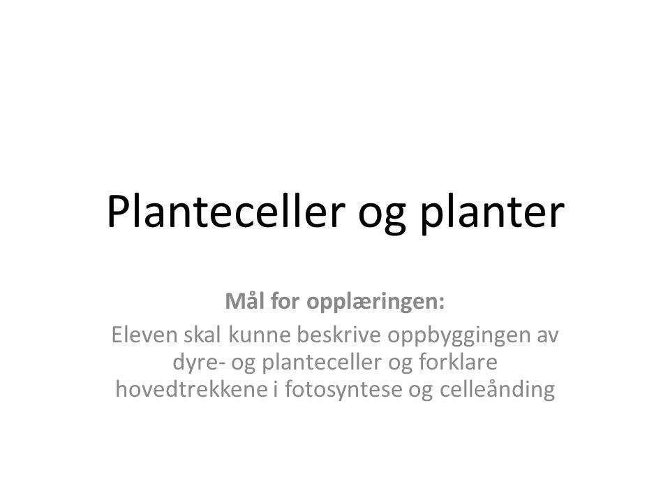 Planteceller og planter Mål for opplæringen: Eleven skal kunne beskrive oppbyggingen av dyre- og planteceller og forklare hovedtrekkene i fotosyntese