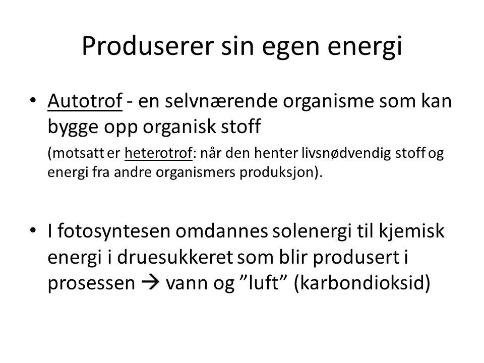Produserer sin egen energi Autotrof - en selvnærende organisme som kan bygge opp organisk stoff (motsatt er heterotrof: når den henter livsnødvendig s