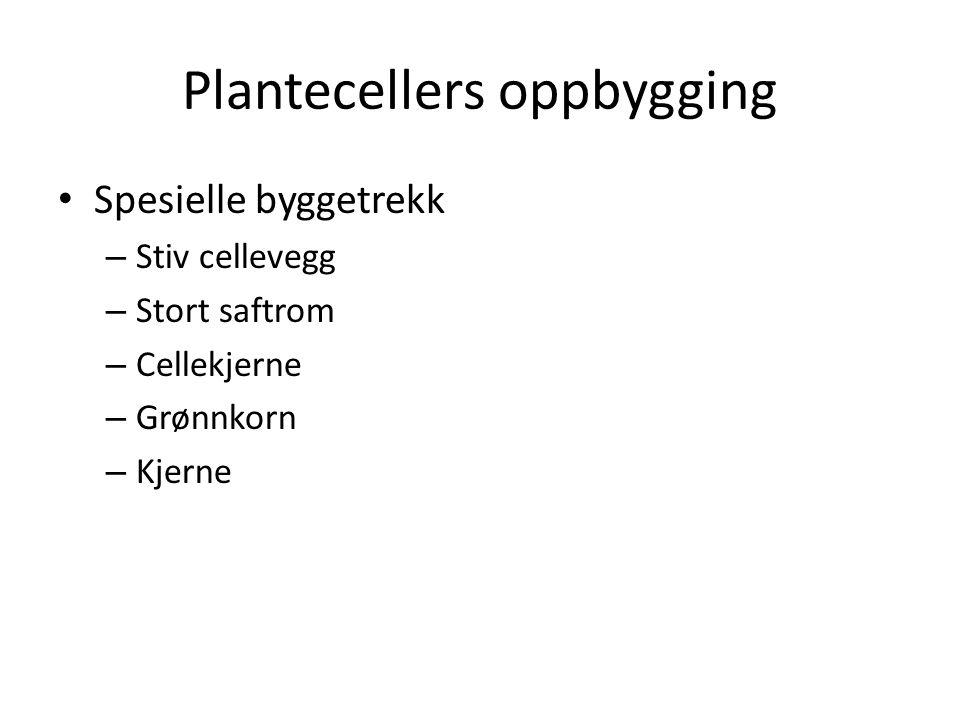 Plantecellers oppbygging Spesielle byggetrekk – Stiv cellevegg – Stort saftrom – Cellekjerne – Grønnkorn – Kjerne