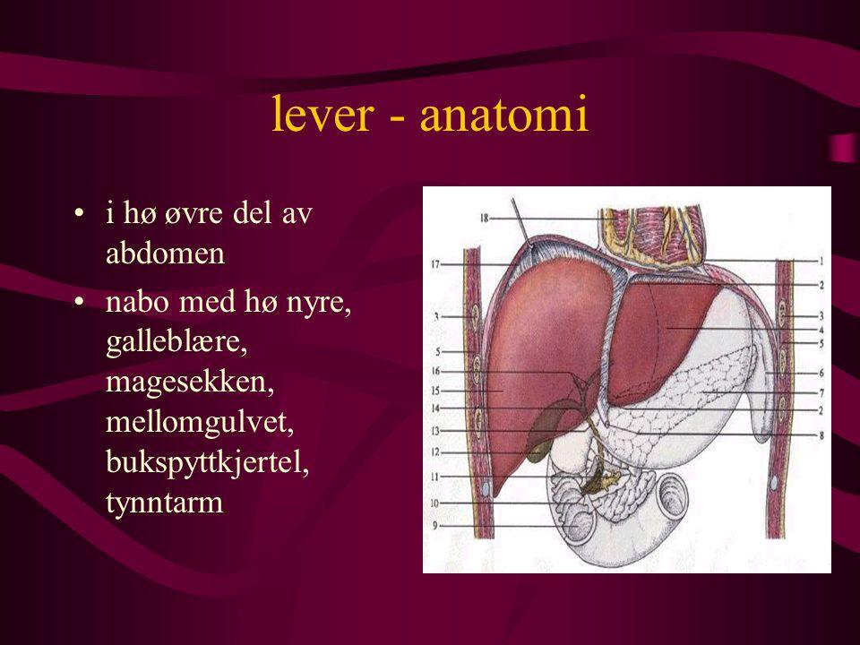 lever - anatomi får både arterielt blod fra leverarterien (20%) og venøst blod fra portvenen (80%) portveneblod er næringsrik - kommer fra magesekken og tarmen (og milt og pankreas
