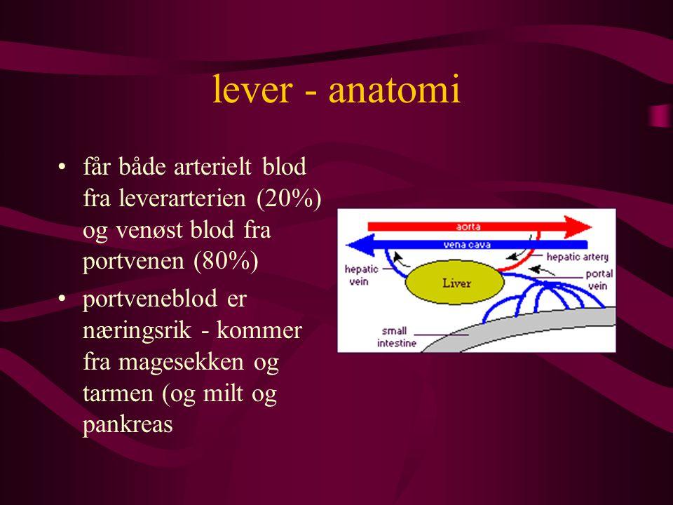 lever - sykdommer cirrhose - endstadiet av mange leversykdommer –betennelsen fører til økt bindevevdannelser i septene mellom lobuli –øker risiko for å få leverkreft