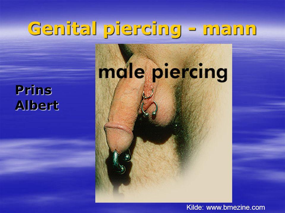 Genital piercing - mann Kilde: www.bmezine.com Prins Albert