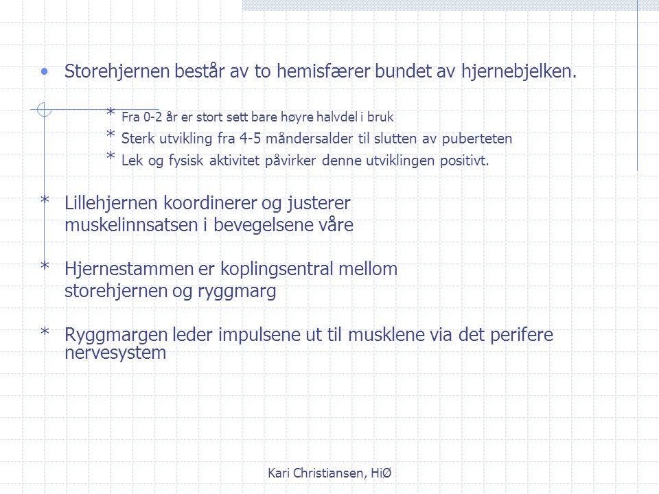 Kari Christiansen, HiØ Det sentrale nervesystemet Består av storehjerne, lillehjerne, hjernestamme og ryggmarg.