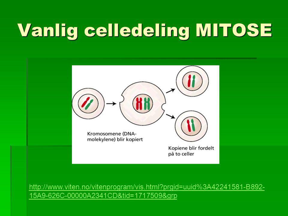 Vanlig celledeling MITOSE http://www.viten.no/vitenprogram/vis.html?prgid=uuid%3A42241581-B892- 15A9-626C-00000A2341CD&tid=1717509&grp