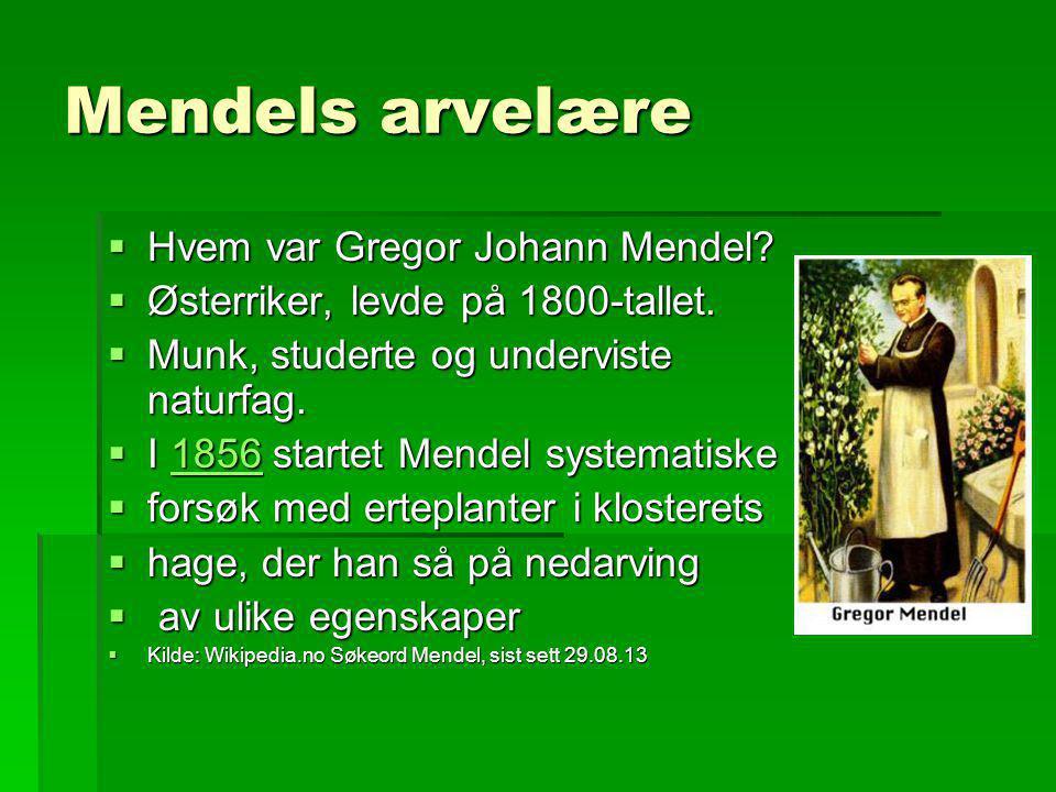 Mendels arvelære  Hvem var Gregor Johann Mendel?  Østerriker, levde på 1800-tallet.  Munk, studerte og underviste naturfag.  I 1856 startet Mendel